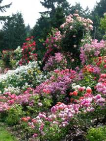 1000 images about garden european formal informal climbing roses mixed w variety misc vntg