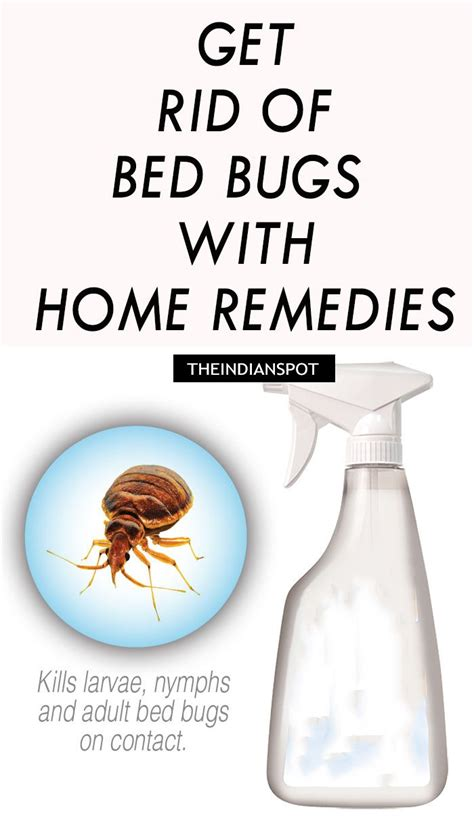 ideas  bed bug remedies  pinterest bed bugs bug trap  curse spells