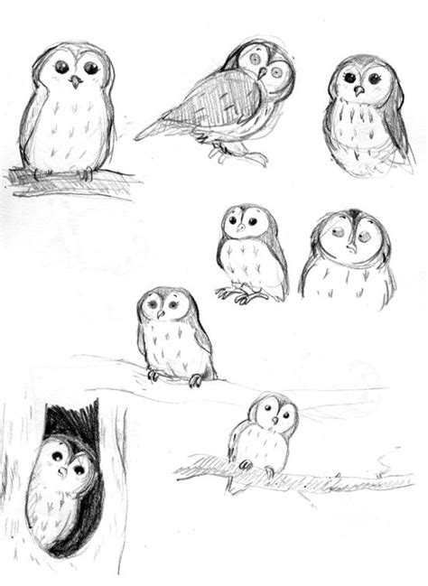 doodle draw owl le catalogue d id 233 es