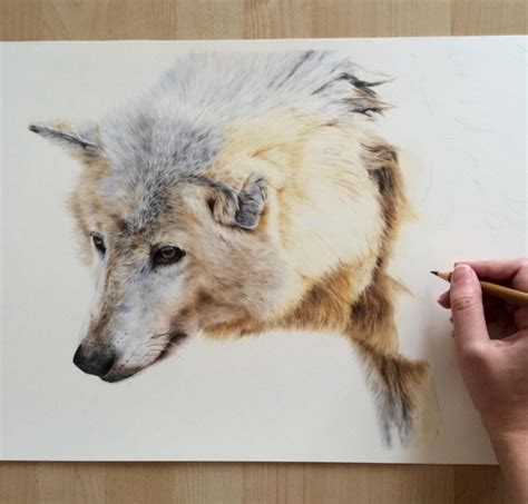 Animal Pencil stunning animal pencil drawings 12