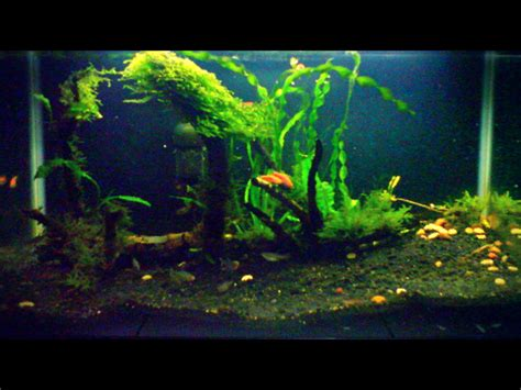 desain kayu aquascape aquascaping freshwater tomsee