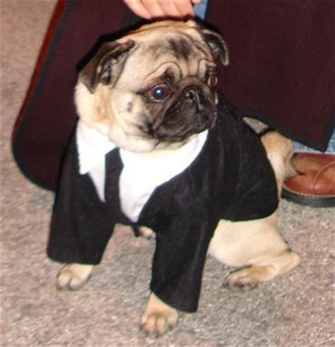 frank the pug costume mange mites book covers
