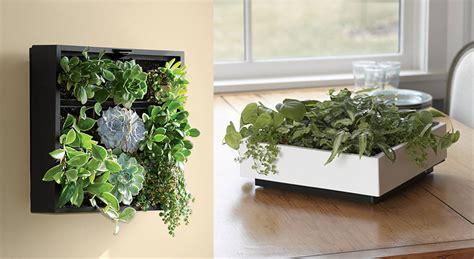 living art green wall tabletop planter the green head