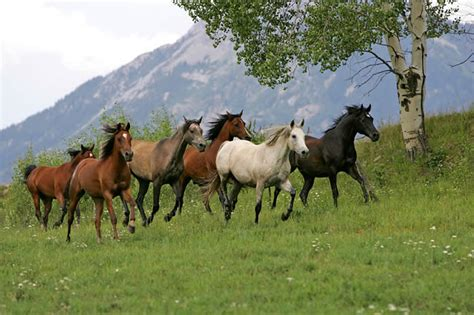 nice hourse ranch horses how to stock your ranch ranch horses for sale