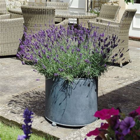 metal planters garden requisites steel planters troughs
