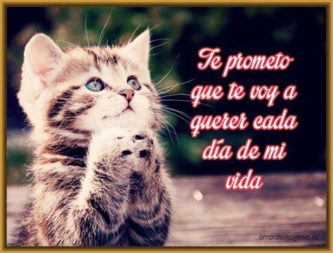 imagenes lindas de amor de gatitos lindas imagenes de gatitos tiernos con frases de amor
