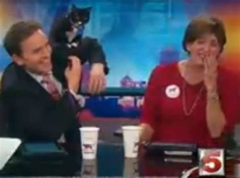 whats wrong with the ksdk news caster video cat goes baffroom on ksdk channel 5 anchor pat