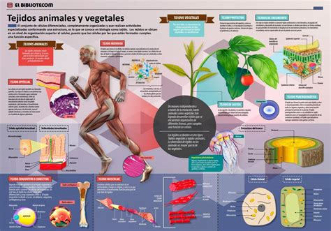 tejidos animales y vegetales tejidos animales y vegetales invdes