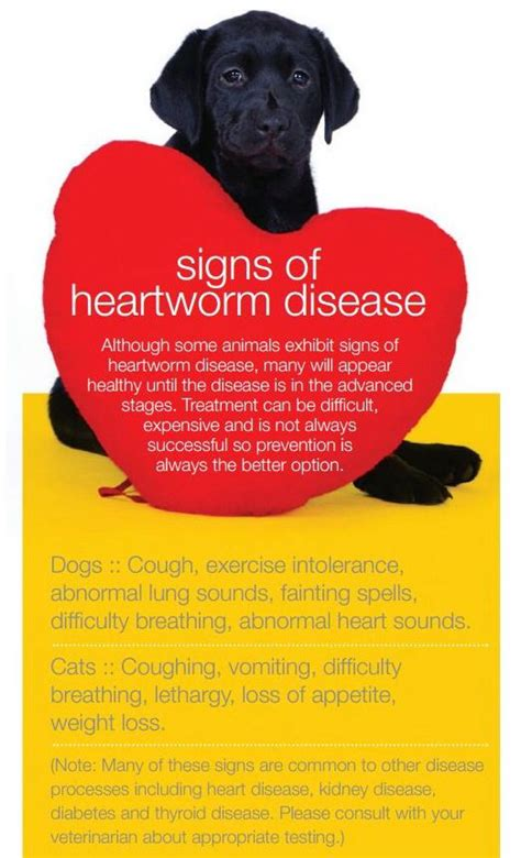 signs of heartworm in dogs the 26 best images about april heartworm awareness month on for dogs don