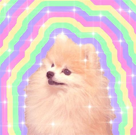 rainbow pomeranian we your favourite breed based on your favourite youtuber glow we and the o