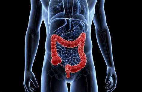 Much Stool In Colon by Colon Large Intestine Disorders Spiritual Meaning Causes And Healing