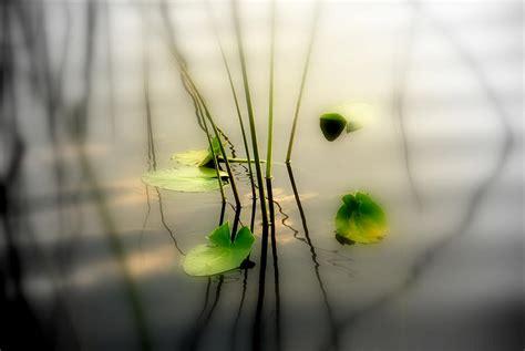 Zen Home Decor Harmony Zen Photography Ii Photograph By Susanne Van Hulst