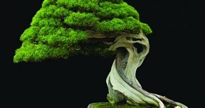 tanaman bonsai termahal  dunia sekaligus