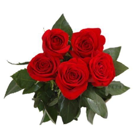gambar bunga rose layu gambar okt