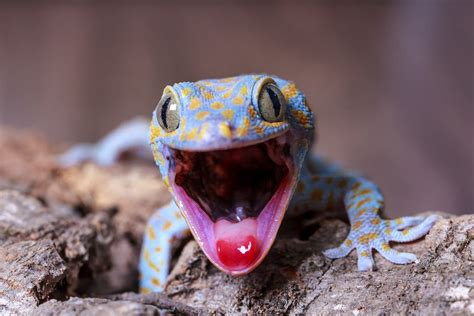 Top 10: Totally gorgeous geckos | Film and Photo | Earth ...
