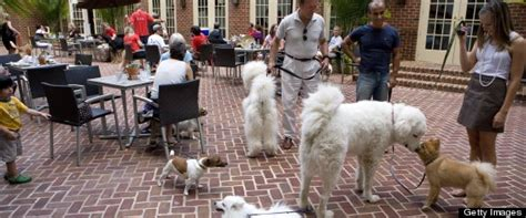 restaurants that allow dogs friendly dining in d c arlington to allow dogs at outdoor restaurants