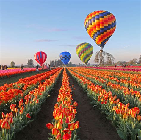 related keywords suggestions for tulipfestival