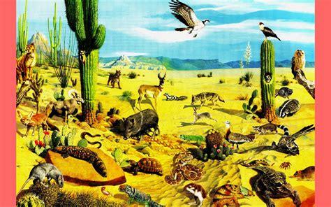 imagenes de animales del desierto animales del desierto imagenes wallpapers laminas