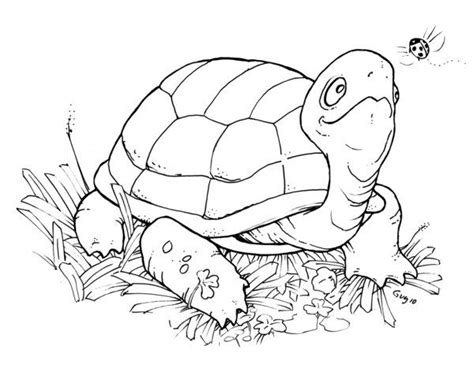 pet turtle coloring page 64 best images about ღ stencil it frogs and turtles ღ on