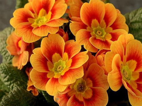 beautiful orange god s beautiful orange flowers god the creator photo