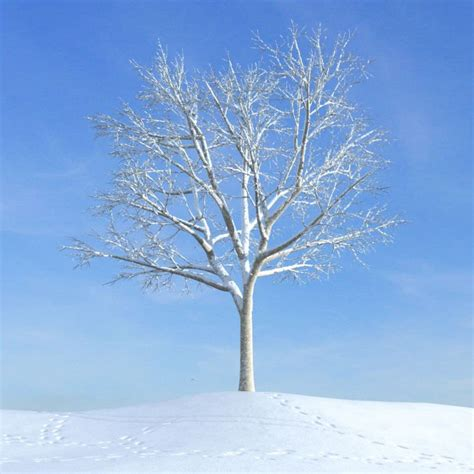 snowy tree white snowy tree 3d model cgtrader