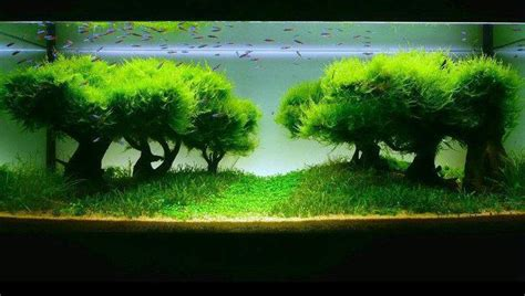 Best Substrate For Aquascaping Freshwater Fish Tank Plant Care Setting Up A Fish Tank