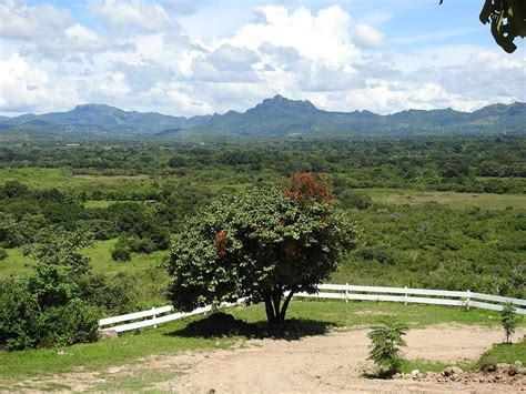 tree farms for sale organic fruit tree farms for sale