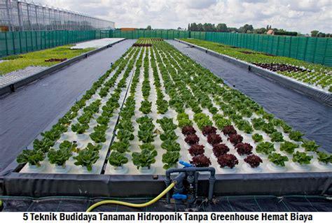 membuat greenhouse untuk hidroponik 5 teknik budidaya tanaman hidroponik tanpa greenhouse