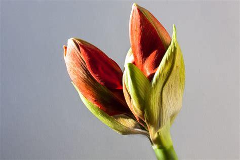 significato di fiore significato dei fiori