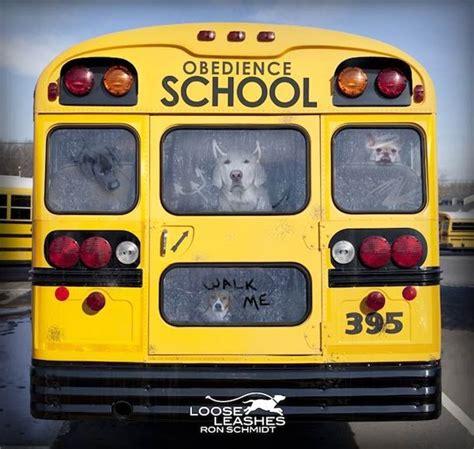 Jo In Leashes L loldogs 21 photos cr 233 atives de chiens par schmidt