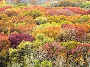 fall colors soak up galena fall colors during a midweek getaway