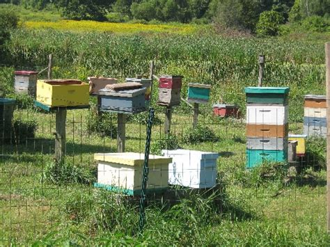 saturday february 4 9 00 am 12 00 noon beekeeping