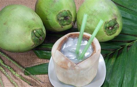 Bibit Kelapa Genjah Entok air kelapa genjah entok jualbenihmurah