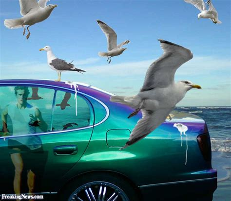 the woo of poo change your in the time you take a sh t books seagull pictures freaking news