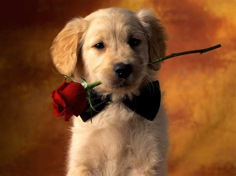 puppy love wallpapers hd wallpapers id