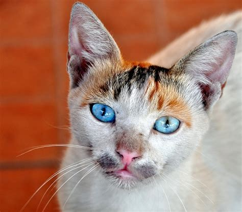google images cats a cat named google