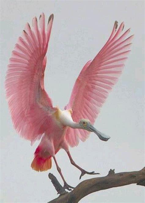 beautiful pink bird birds pinterest