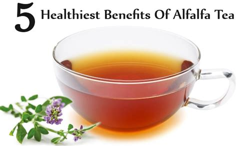 5 healthiest benefits of alfalfa tea diy health remedy
