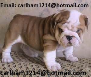 free puppies in gulfport ms dogs gulfport ms free classified ads