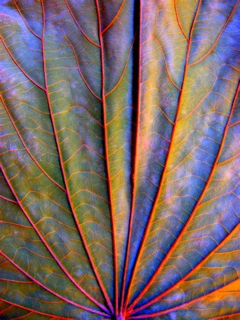 pattern artists nature best 25 nature pattern ideas on pinterest natural