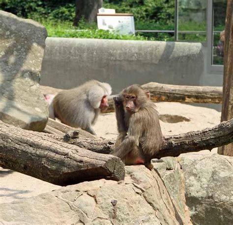 der zoologische garten berlin zoologischer garten berlin zoo berlin wahrzeichen berlin