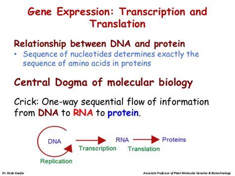 molecular genetics section 3 dna rna and protein molecular genetics