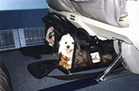 Delta Airlines Pets In Cabin by Sherpa Faq