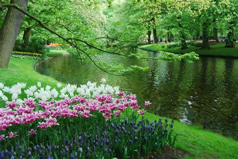 imagenes de paisajes guapos flores en holanda la zapatilla