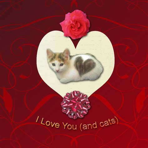 cat valentines card s day card for cat
