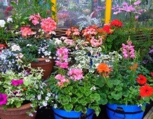 topfpflanzen garten garten und pflanzen im mai garten pflanzen