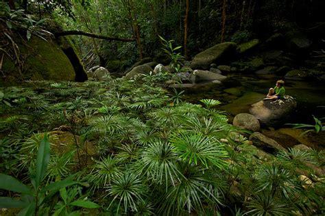 taman nasional gunung palung tngp world tourism indonesia
