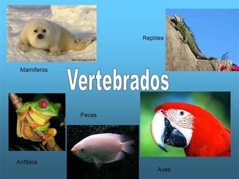 imagenes de animales vertebrados mamiferos reptiles mamiferos vertebrados peces anfibios aves ppt
