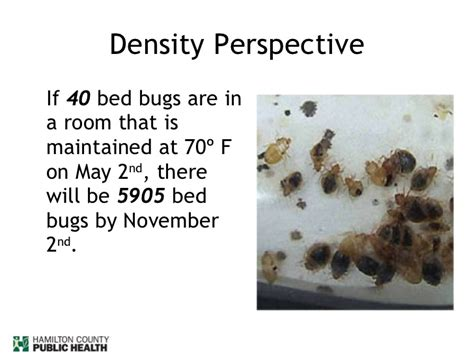 Can Bed Bugs Stay In One Room by How To Deal With Bed Bugs