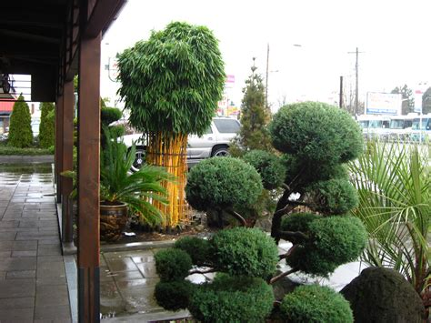 how do i get rid of bamboo in my backyard 100 how do i get rid of bamboo in my backyard how to get rid of grass to reduce